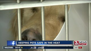 Keeping pets cool in the summer