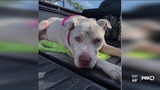 Police searching for person who shot dog