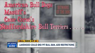 Lakewood City Council to discuss pit bull ban - Video