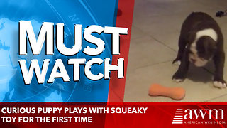 Cute Puppy Plays With Squeaky Toy For The First Time