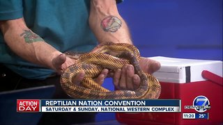 Reptilian Nation Expo in Denver this weekend