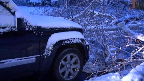 Heavy snow is weighing down tree branches, power lines around Denver