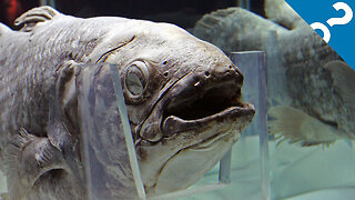 What the Stuff?!: 5 Bizarre Facts About the Coelacanth