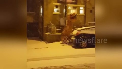 T. Rex caught dancing in the street during snowstorm