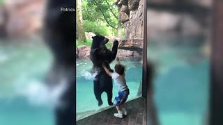 Video shows bear, 5-year-old jumping together - Video
