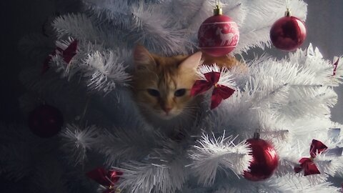 Cats as the main decoration of the Christmas tree