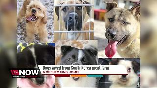 Six dogs rescued from meat farm up for adoption - Video