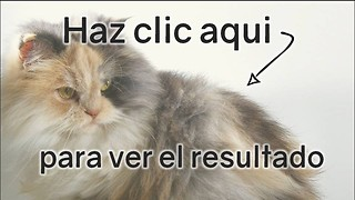 Quiz de gatos: Puntaje bajo - Video