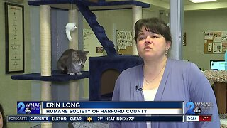 CMore than 70 cats rescued from home