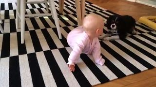 Baby Girl Loves Being Entertained By Adorably Energetic Pup - Video