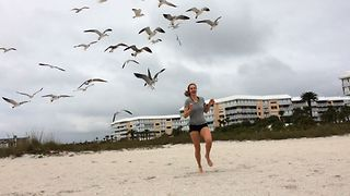 Why You Shoud Never Feed Seagulls - Video