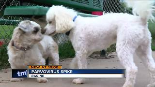 'Puppy killer' virus strikes SE Wisconsin - Video