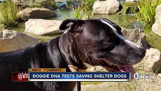 DNA testing shelter dogs is making them more adoptable - Video