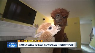 Stow family fights to keep alpacas as therapy pets