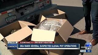 Police Raid Homes with Suspected Illegal Marijuana Grows - Video