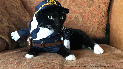 Cat not too thrilled with police officer costume