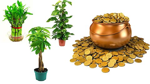 10 Lucky Plants That Will Bring Wealth and Prosperity In 2020