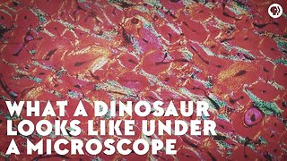 What a Dinosaur Looks Like Under a Microscope - Video