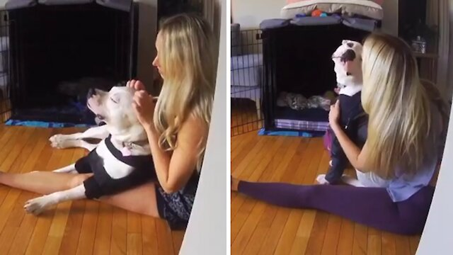 Morning doggy cuddles captured in sweet compilation