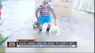 Local animal shelter going to Puerto Rico - Video