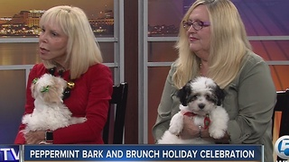 Peppermint Bark and Brunch Holiday Celebration - Video