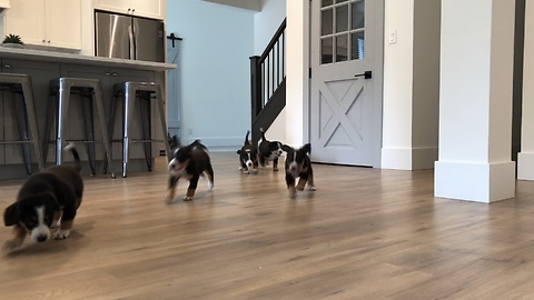 Puppies Come Barrelling Through The Kitchen For Lunch