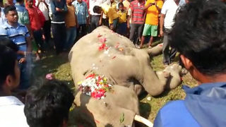Villagers arrange funeral for elephant that died after hit by train - Video