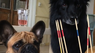 When the humans play with little sticks...  - Video