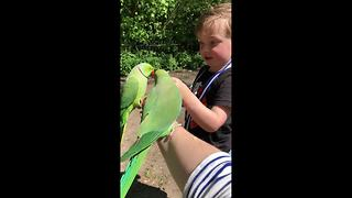 Tropical weather in London and tropical birds - Video