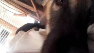 Adorable Coati Gets Up Close and Personal With Camera