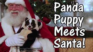 Funny panda dog meets Santa Claus - Video