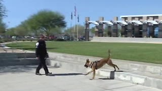 Meet North Las Vegas' newest police dog - Video