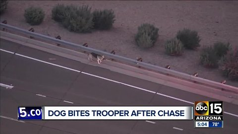 DPS troopers corral dog after hours on Valley freeways