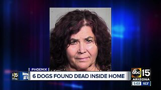 Six dogs found dead inside home