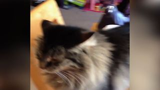 Kitty Has A Sticky Situation - Video