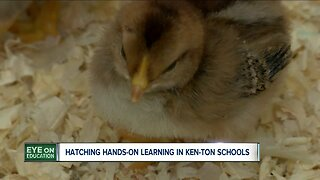 Hatching hands on learning in Ken-Ton schools