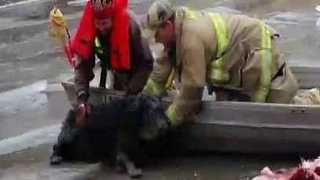 Firefighters Save Dog Stranded on Icy River in Madison County, Iowa - Video