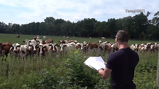 One-Man 'Burping Concert' Attracts Large Gathering Of Cattle - Video