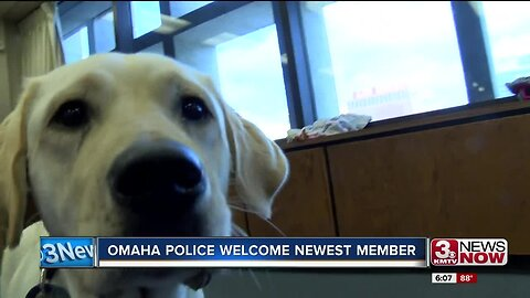 Omaha Police Welcome Newest Member to the Team