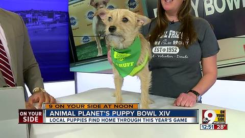 Animal Planet's Puppy Bowl XIV To Raise Awareness About Pet Adoption