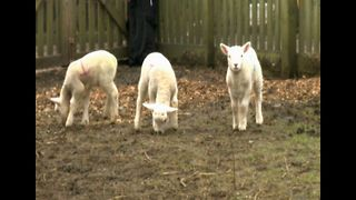 Children's Farm Needs Shepherds - Video