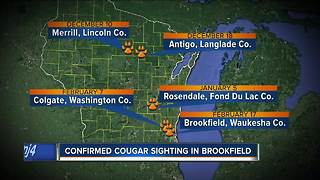 Cougar spotted by Brookfield resident - Video