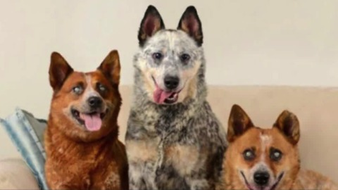 Woman adopts 3 blind dogs, gets community support