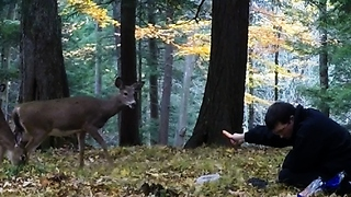Man unbelievably entices wild deer from the forest - Video