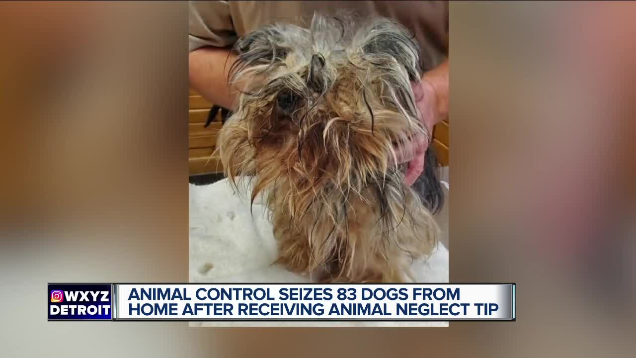 Animal Control seizes 83 dogs from home in St. Clair Township