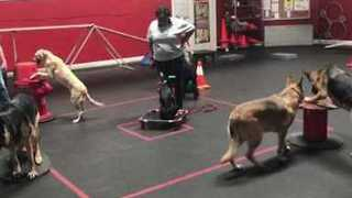 Doggy Musical Chairs Help Train Playful Pooches - Video