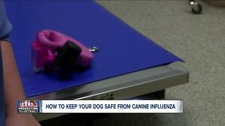 How to keep your dog safe from Canine Flu