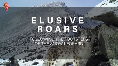 Researchers On A Quest To Track Endangered Snow Leopards
