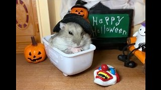 Adorable Hamster Enjoys Early Halloween Treat in Tiny Bathtub