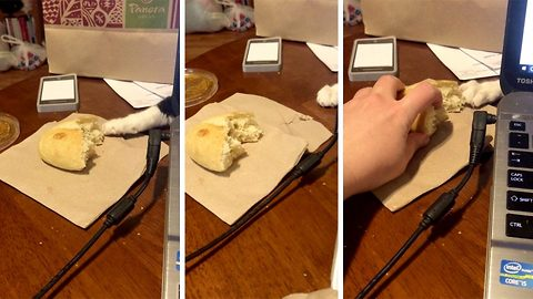 Cat bageler: Sneaky cat burglar persistently tries to steal bread roll from behind laptop